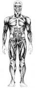 the elastic suit